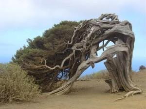 albero-piegato-dal-vento